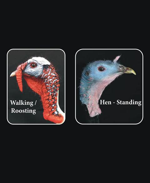 Hen And Turkey Freeze Dry Head